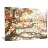 big tree photography canvas art print PT6446