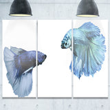 fighting fish digital art animal canvas art print PT6459