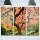 autumn maple tree landscape photography canvas print PT6493