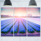field of blooming hyacinth flowers canvas art print PT7073