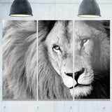 lion head in grey animal digital art canvas print PT7160