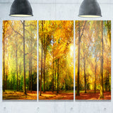 gorgeous autumn of sunny forest landscape photo canvas print PT7484