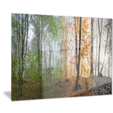 morning forest panorama landscape photo canvas print PT8174