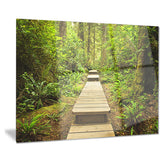 path in temperate rainforest landscape photo canvas print PT8314