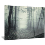trail through dark forest landscape photo canvas art print PT8435