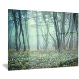 trail through foggy forest landscape photo canvas art print PT8437