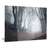 mysterious fairytale foggy wood landscape photo canvas print PT8486