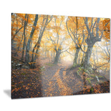 dark yellow old forest in fog landscape photo canvas print PT8624