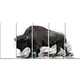 Migrating Bison- Animal Canvas Print PT2333