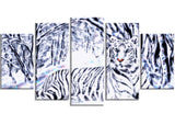 White Tiger White Forest - PT2451