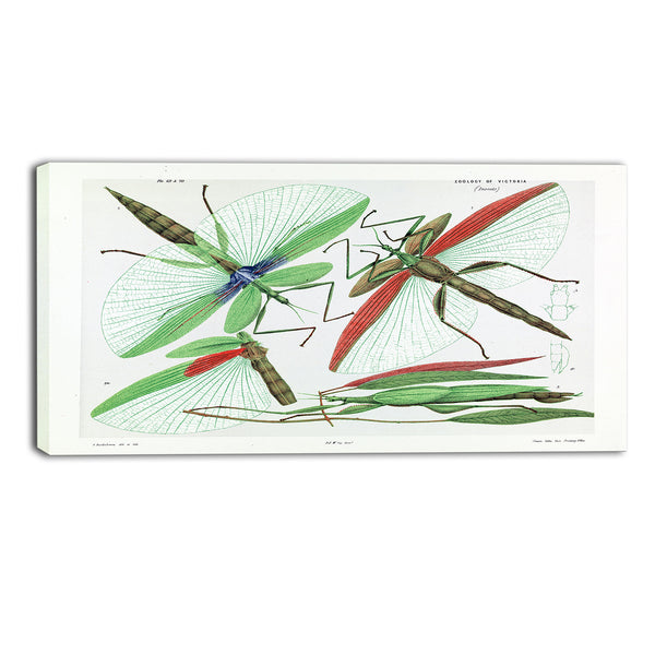 MasterPiece Painting - Arthur Bartholomew Red shouldered stick insect