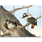 MasterPiece Painting - Neville HP Cayley Laughing Kookaburra