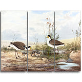 MasterPiece Painting - Neville HP Cayley Masked Lapwing