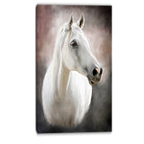 lovely white horse animal canvas art print PT6376