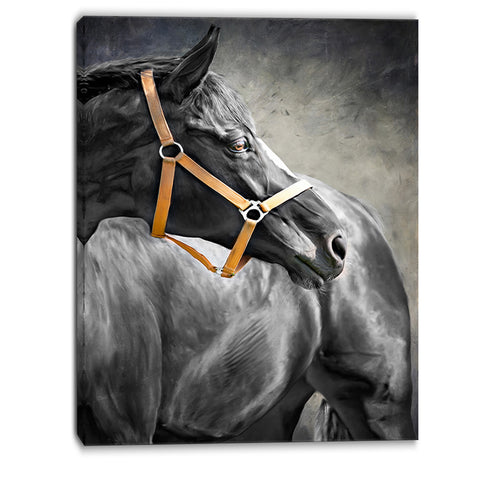 black horse animal canvas art print PT6379