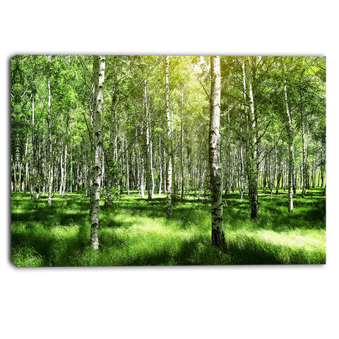 beautiful birch grove landscape canvas art print PT6380