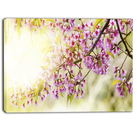 blooming cherry flowers floral photography canvas print PT6423