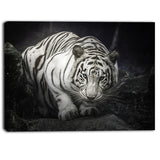 white tiger animal photography canvas art print PT6426