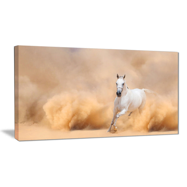 arabian horse in desert storm photography canvas art print PT6469
