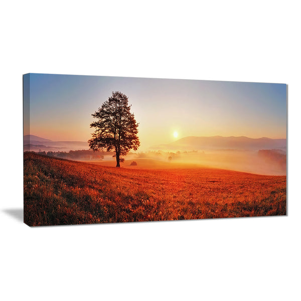 tree and sun landscape photography canvas art print PT6472