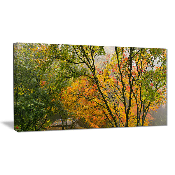 canopy of maple trees in fall floral photo canvas print PT6487