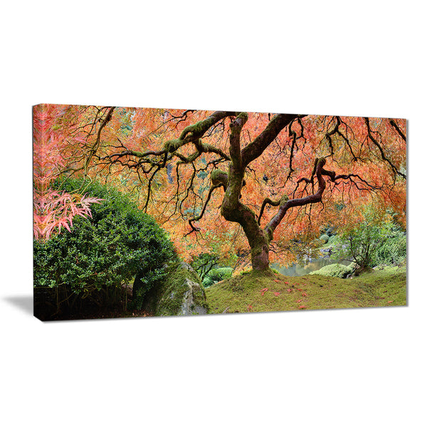 old japanese maple tree landscape photography canvas print PT6488