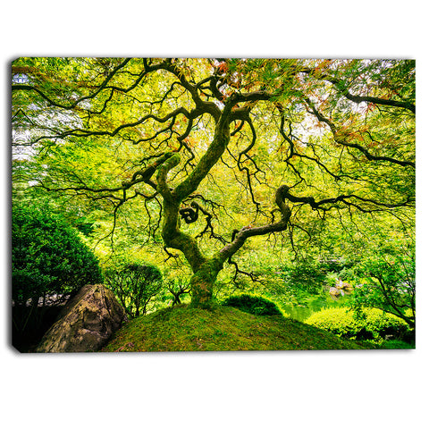 amazing green tree photography canvas art print PT6494
