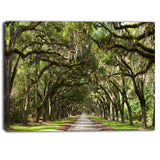 live oak tunnel photography canvas art print PT6553