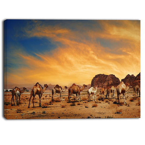 camels in wadi rum photography canvas art print PT6727
