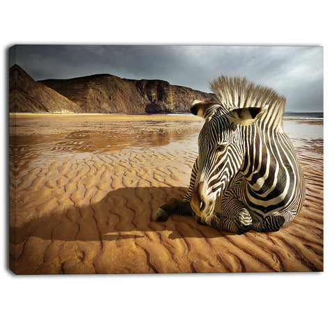beach zebra animal photography canvas print PT6787