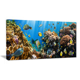 coral colony panorama photography canvas art print PT6806