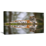 tiger reflecting in water animal photography canvas print PT6838
