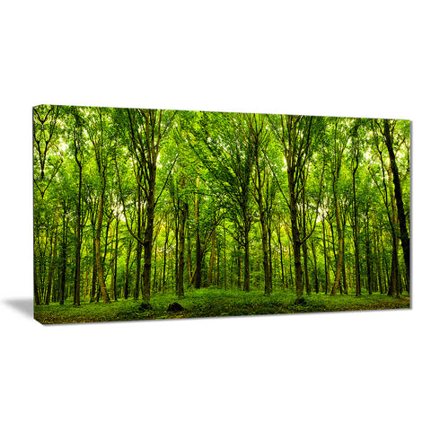Green Forest Landscape Photo Canvas Art Print