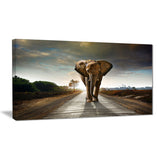 single walking elephant photography canvas print PT6999