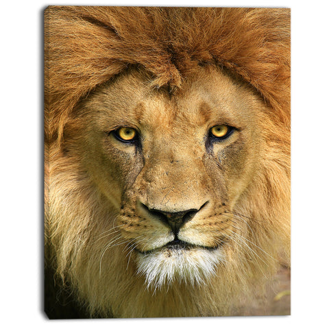 lion with calm face animal art canvas print PT7165