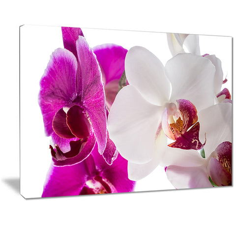 blooming orchid flowers digital art canvas art print PT7295
