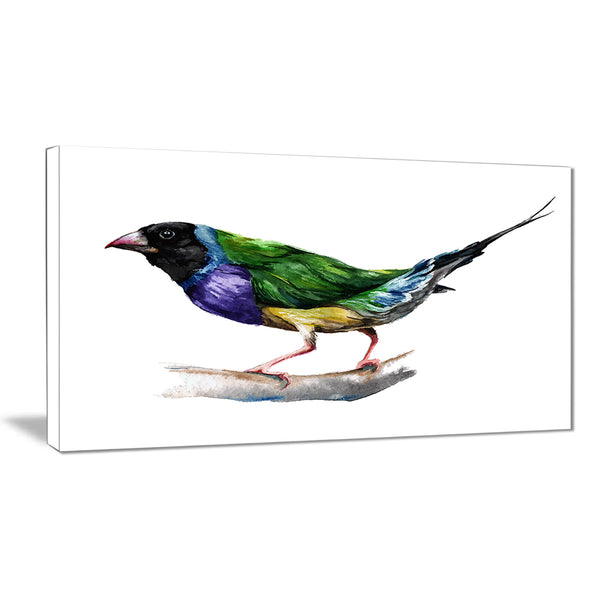 gould finch animal painting canvas art print PT7491