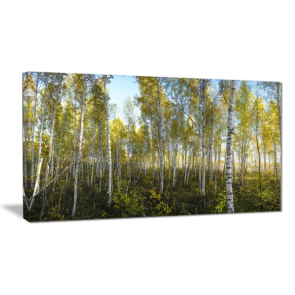 green autumn trees landscape photo canvas print PT8167