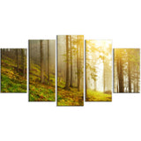 sun finds its way in forest landscape photo canvas print PT8175