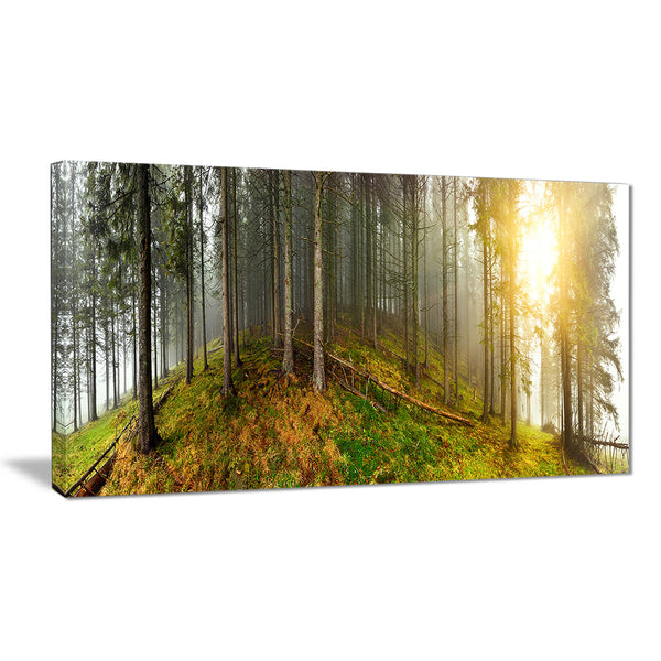 early morning sun in forest landscape photo canvas print PT8176