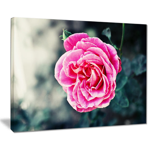red rose in vintage style floral digital art canvas print PT8296