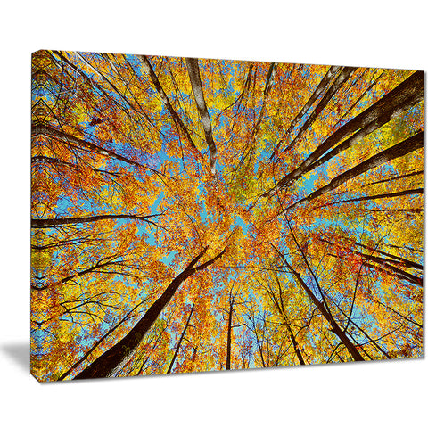 tree tops in autumn forest trees photo canvas art print PT8315