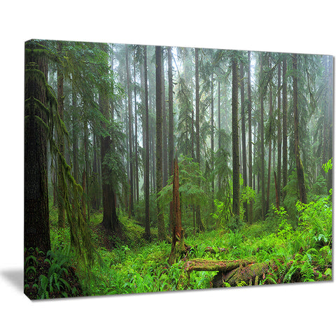 hoh rain forest landscape photography canvas print PT8332