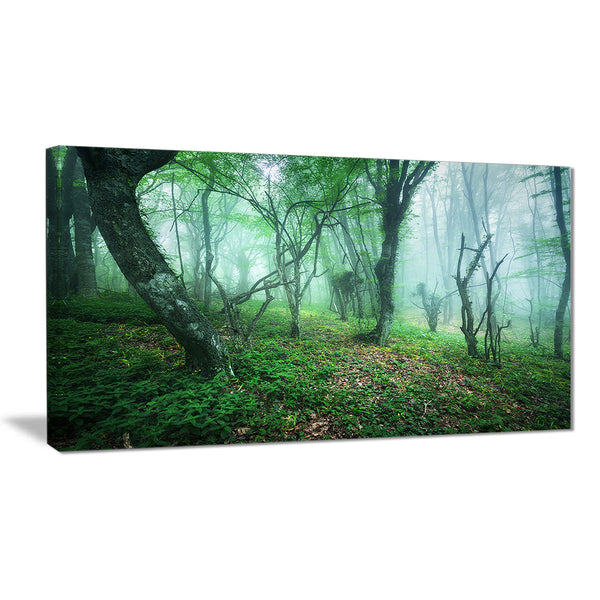 trail through green forest landscape photo canvas print PT8443