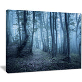 spring foggy forest trees landscape photo canvas print PT8458