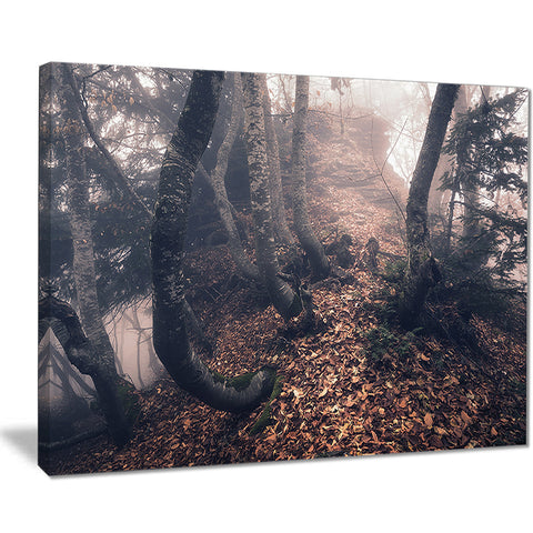autumn foggy forest trees landscape photo canvas print PT8459