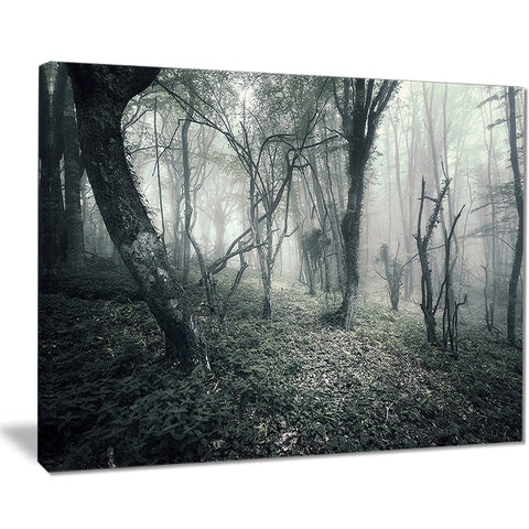 vintage forest filled with fog landscape photo canvas print PT8464