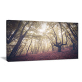 high rise trees in forest landscape photo canvas print PT8474