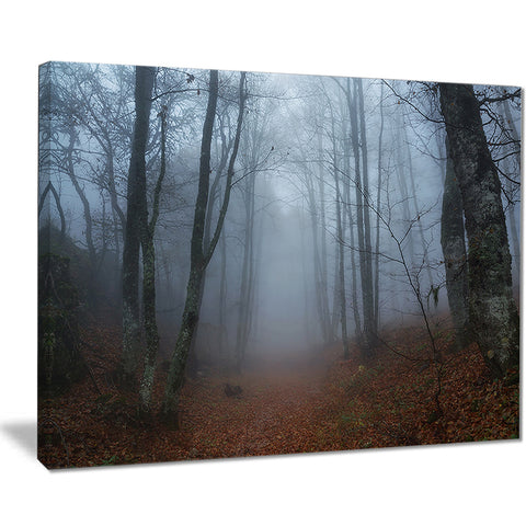 autumn rainy forest in crimea landscape photo canvas print PT8480