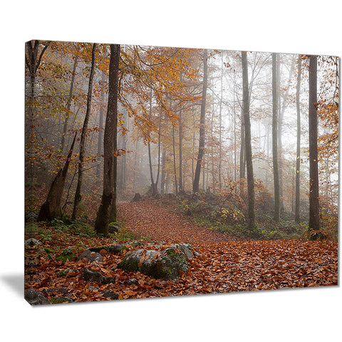 autumn forest in germany landscape photo canvas print PT8482